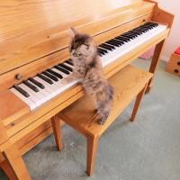 tory piano